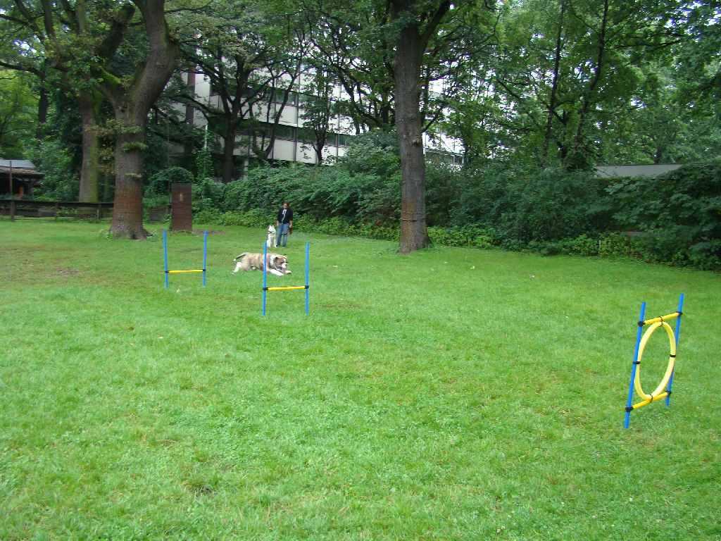 2012-08-05_hundetraining_162