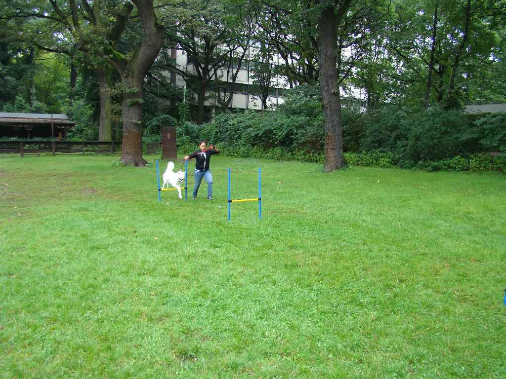 2012-08-05_hundetraining_169