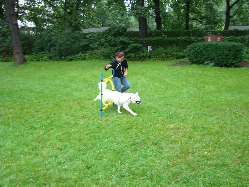 2012-08-05_hundetraining_174