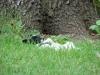 2012-08-05_hundetraining_006