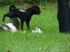 2012-08-05_hundetraining_012