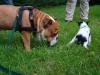 2012-08-05_hundetraining_019