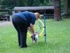 2012-08-05_hundetraining_026