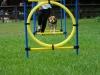 2012-08-05_hundetraining_045