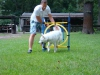 2012-08-05_hundetraining_063