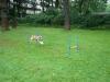 2012-08-05_hundetraining_155