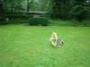 2012-08-05_hundetraining_157