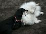 08.01.2012 Hundetraining