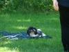 2012-07-08_hundetraining_12