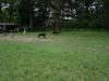 2012-07-08_hundetraining_16