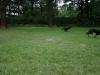 2012-07-08_hundetraining_18