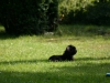 2012-09-09_hundetraining_052