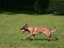 09.09.2012 Hundetraining