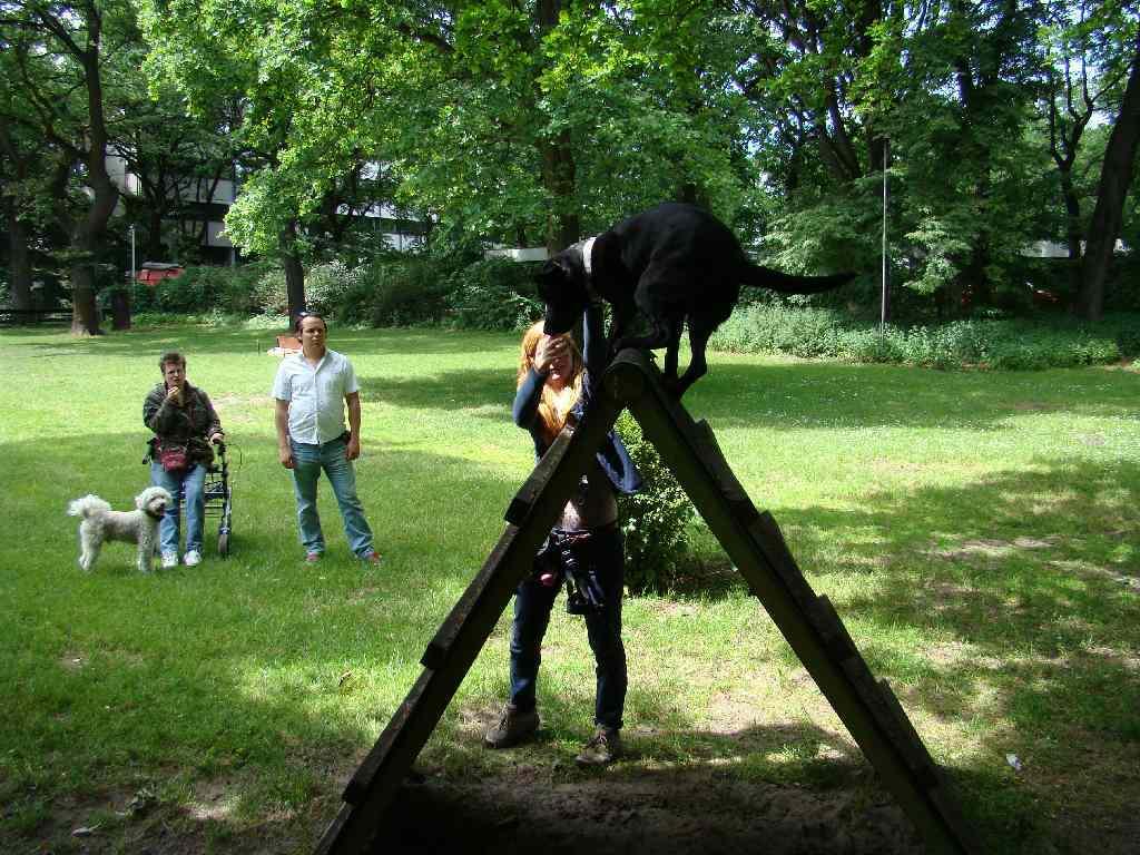 2012-06-10_hundetraining_182