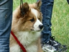 2012-06-10_hundetraining_010