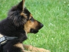 2012-06-10_hundetraining_012