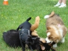 2012-06-10_hundetraining_016