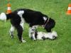 2012-06-10_hundetraining_018