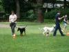 2012-06-10_hundetraining_025