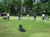 2012-06-10_hundetraining_032