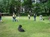 2012-06-10_hundetraining_034