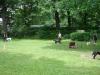 2012-06-10_hundetraining_045