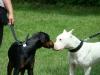 2012-06-10_hundetraining_047