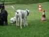 2012-06-10_hundetraining_061