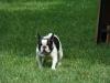 2012-06-10_hundetraining_063