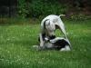 2012-06-10_hundetraining_073