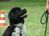 2012-06-10_hundetraining_074