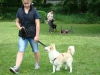 2012-06-10_hundetraining_090