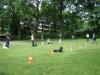 2012-06-10_hundetraining_098