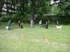 2012-06-10_hundetraining_142