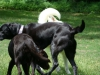 2012-06-10_hundetraining_162