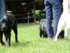 2012-06-10_hundetraining_163