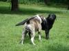 2012-06-10_hundetraining_166