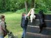 2012-06-10_hundetraining_176