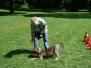12.08.2012 Hundetraining
