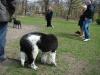 2012-04-15_hundetraining_002
