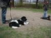 2012-04-15_hundetraining_008