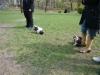 2012-04-15_hundetraining_009