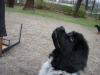 2012-04-15_hundetraining_012