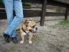 2012-04-15_hundetraining_086