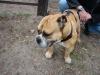 2012-04-15_hundetraining_102