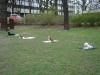 2012-04-15_hundetraining_113