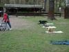 2012-04-15_hundetraining_127