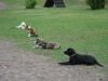 2012-04-15_hundetraining_140