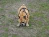 2012-04-15_hundetraining_154