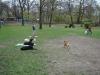 2012-04-15_hundetraining_166